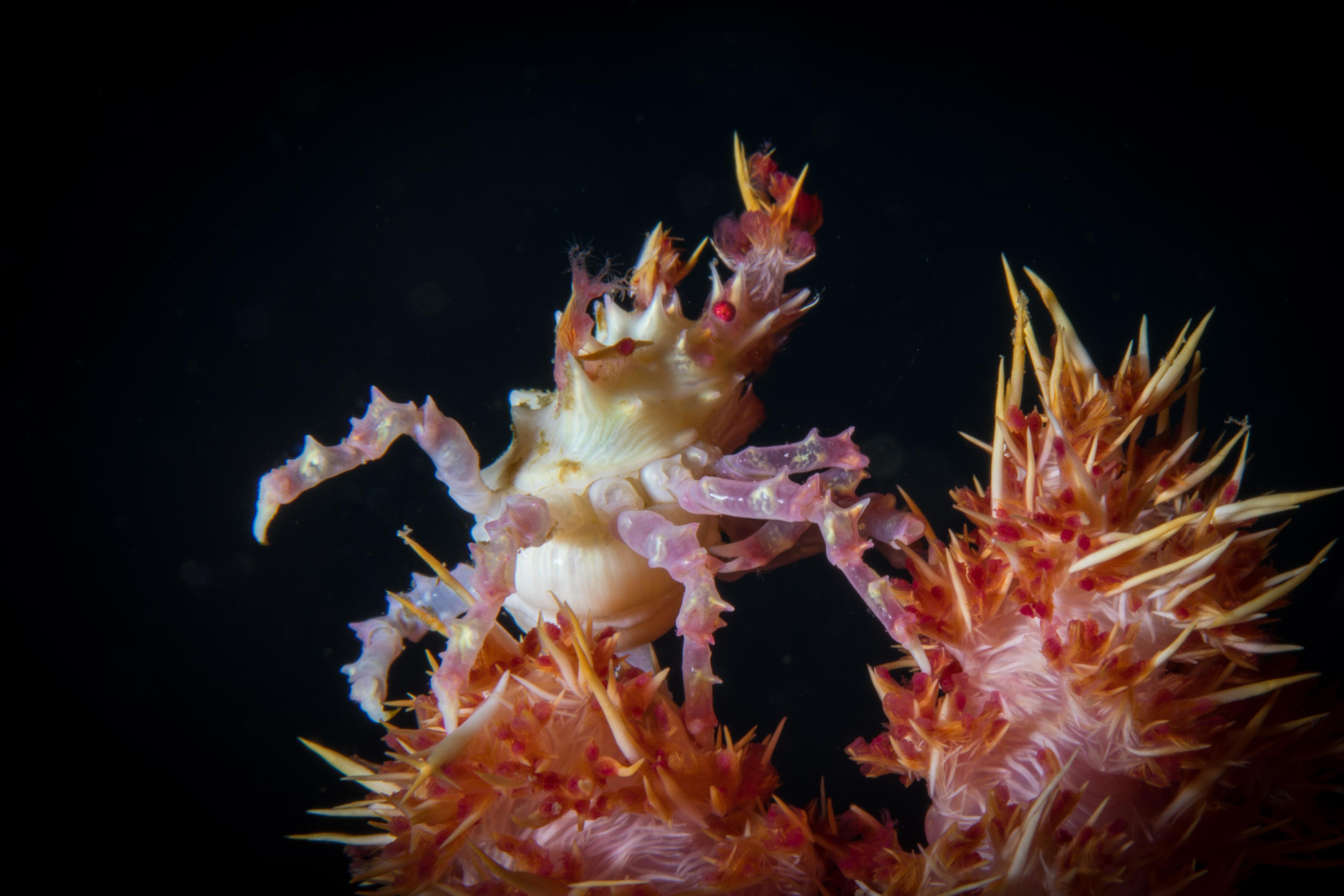 Crab-5014