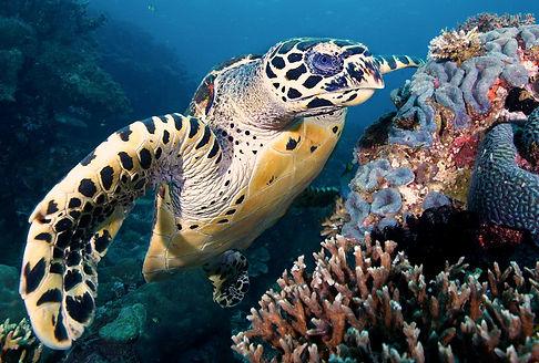 similans-diving-6.jpg