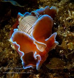 Snail SI-8370