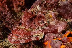 Reef Flathead SI-001