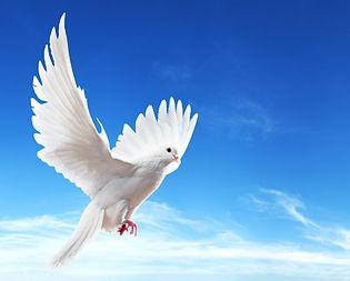Peace & Positivity.jpg