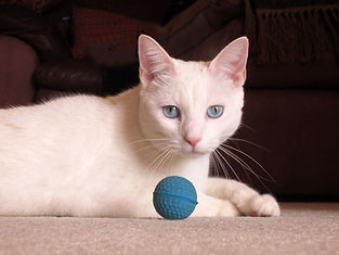 Katie Kitty