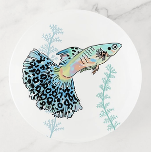 Blue Guppy Trinket Tray