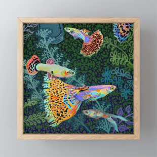 Guppy Rainbow Fish