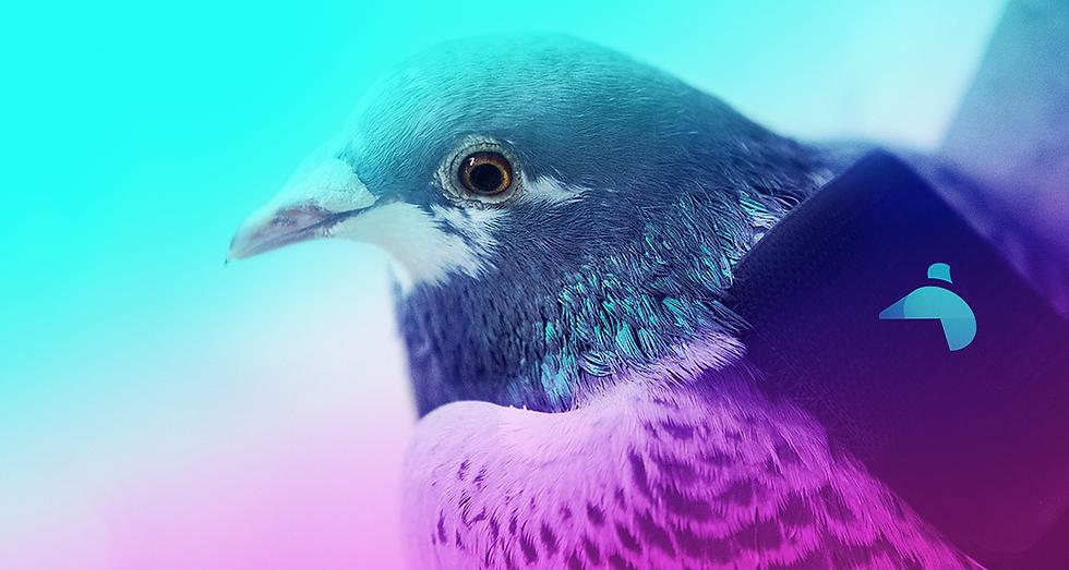 Pigeon Header 02.png
