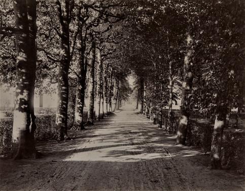 1783-1896 Château Raba  Allées des platanes conduisant à l'orangerie et aux vignes