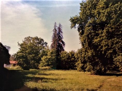 Ancienne propriété Kappelhoff , emplacement actuel rue Chaban Delmas Les mélèzes sont reconnaissables