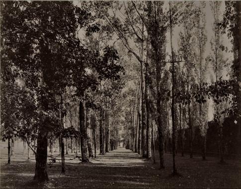 1783-1896 Château Raba  Les peupliers parallèles à la grande allée d'entrée charmille