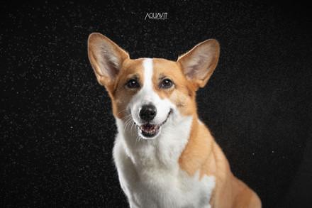 Aquavit Studios   Pet