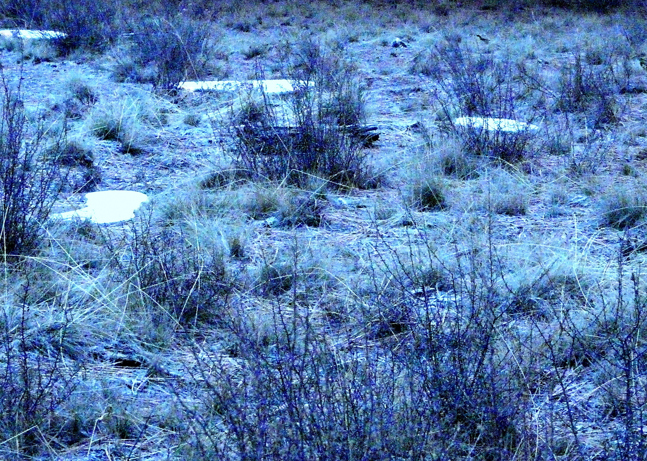 Snow remnants