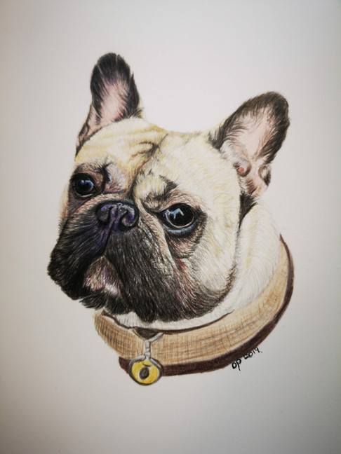 French Bulldog commissioned artwork