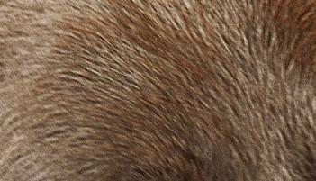 Standard Brown Fur