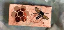 Honeybee Reflections