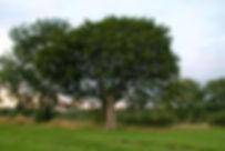 cabane_arbre.JPG