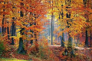 automne paturages de la kys.jpg