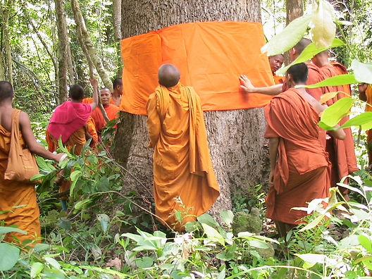 Cambodia-monks-forest rz.jpeg