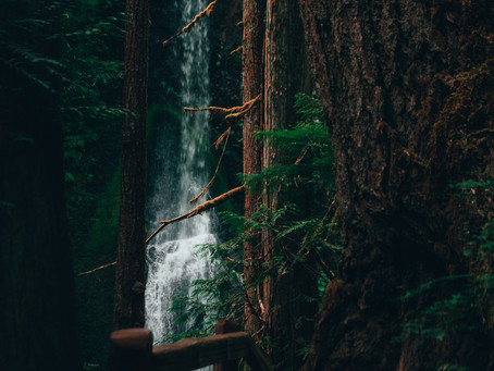The Beauty of The Pacific Northwest
