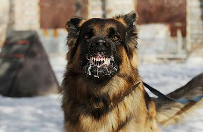כלב כלבת.jpg