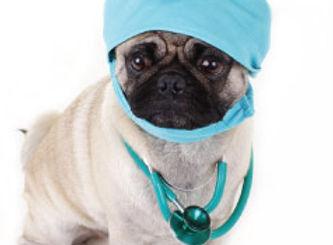 dog-surgery.jpg