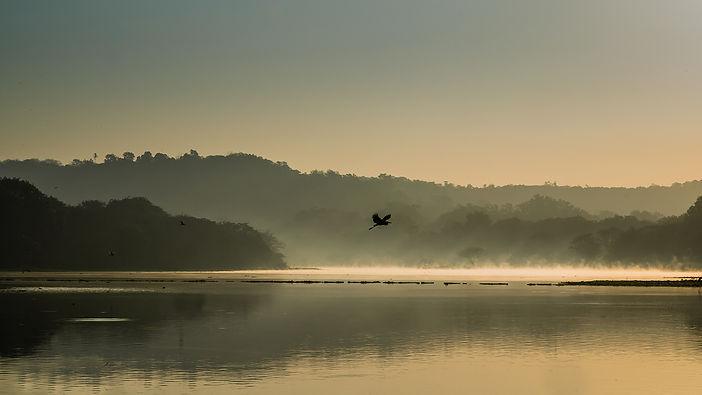 beautiful-shot-bird-flying-lake-water-su