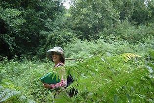 Manon Bordet Chavanes paysagiste relevés botaniques