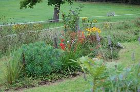 Le jardin 2 ans après plantation - Manon Chavanes paysagiste