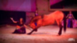 Spectacle équestre au haras d'Hennebont