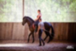 equitation cours dressage