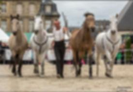 spectacle equestre crée par Thomas Chaput