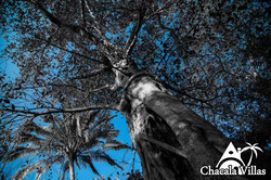 Chacala_2015_fotos_-128