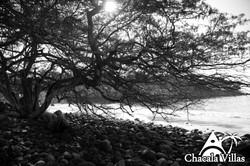 Chacala_2015_fotos_-71
