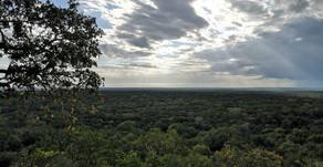 Jueza ratifica suspensión de Tren Maya en Calakmul