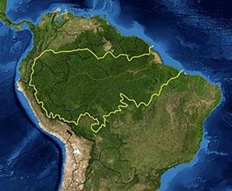 256px-Amazon_rainforest.jpg