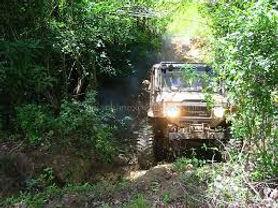 4 wd jungle.jpg