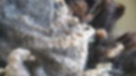 squeek 2.jpg