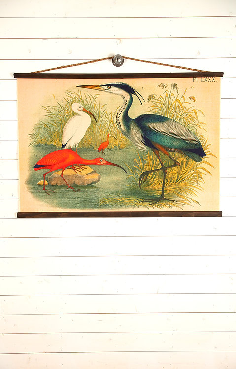 Shore Birds Canvas Wall Chart (1778)