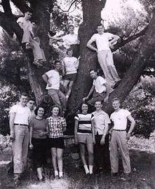 old-tree_orig.jpg