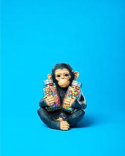 confusing monkey.jpg