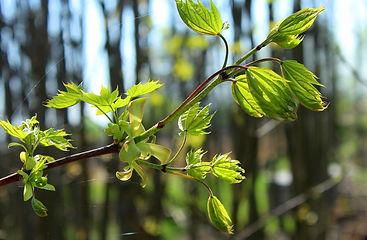 spring-3335477_1920.jpg