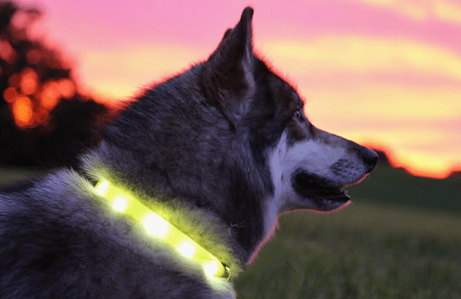 cadeau de Noël collier de chien en LED