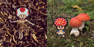 Pappas Pärlor: Mushrooms