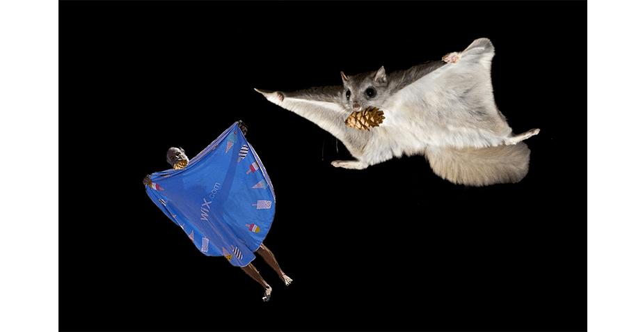 Opher et l'écureuil volant