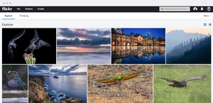 Use Flickr as a powerful image hosting site