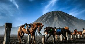 11 sites de photographes Wix hors du commun