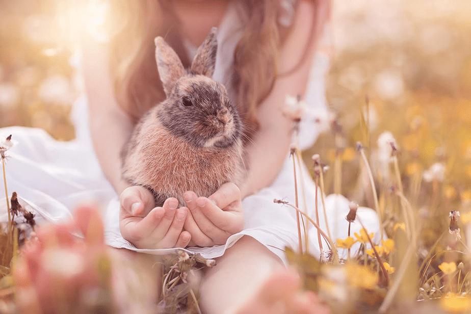bunny held by little girl on field