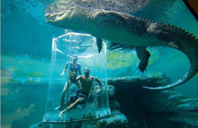 Crocosaurus Cove, Дарвин, Австралия