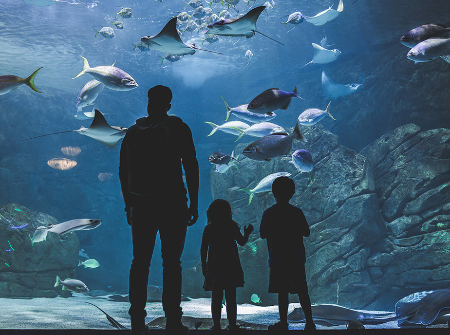 children and dad looking into an aquarium exhibit