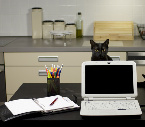 A Cat at a Home Office