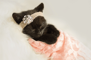Kitty Lee's New Born Kitten Shoot - Kitten in pink blanket
