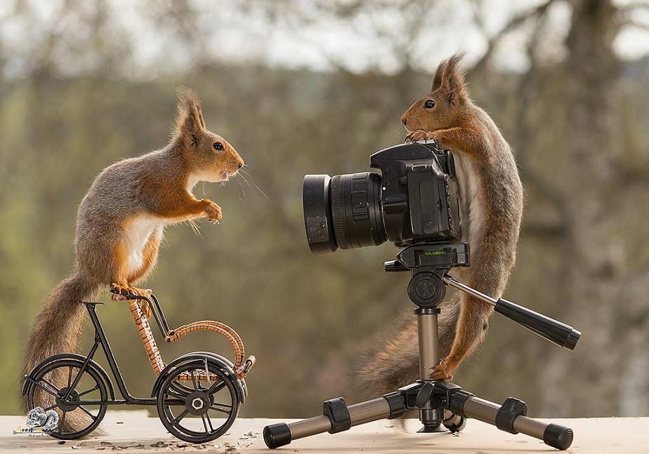 squirrels photographing each other by wix photographer geert weggen